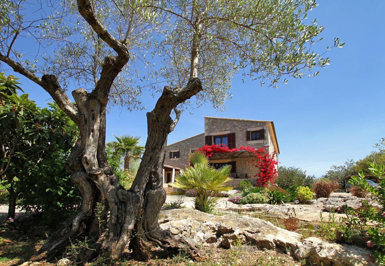 Villa in Pollensa - Olivo De La Roca